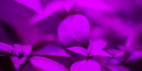 Your Guide To Hydroponic Led Grow Lights Leveck Lighting
