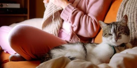 4 Ways to Reduce Static in Your Cat's Fur This Winter, Sanford, North Carolina
