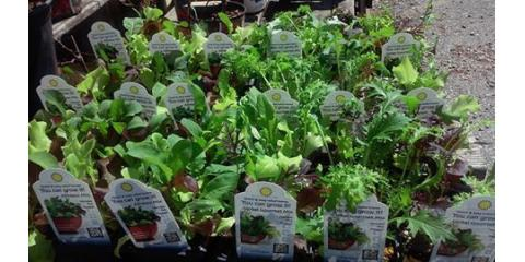 50% OFF HERBS & VEGETABLES, North Bend, Ohio