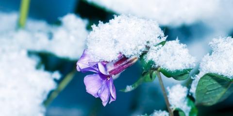 Landscape Contractor's Tips to Prepare Perennials for Winter, Lewisburg, Pennsylvania