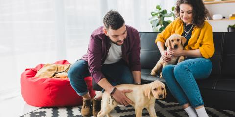 Exercising Your Dog in Apartment Living, Lexington-Fayette, Kentucky
