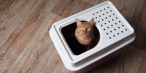 5 Ways to Keep Your Cat's Litter Box Hidden in an Apartment, Lexington-Fayette Central, Kentucky