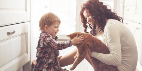 What Happens to Pets During Divorce Under Family Law?, Lexington-Fayette Central, Kentucky