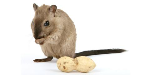 Mouse Extermination Professionals Offer 3 Tips for Effective Prevention, Lexington-Fayette, Kentucky