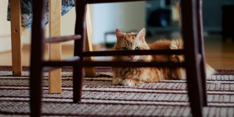 4 Helpful Tips for Pet Owners to Keep HVAC Systems Clean, Georgetown, Kentucky