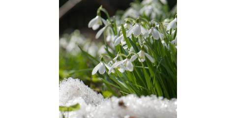 How to Winterize Lawns & Shrubs, Lexington-Fayette, Kentucky