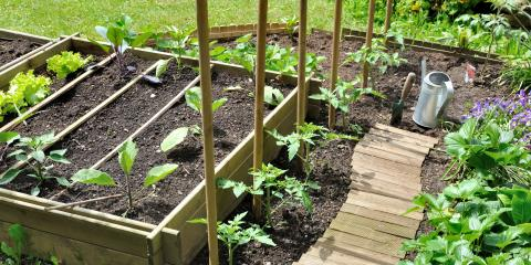 3 Tips for Growing Vegetables at Home, Nicholasville, Kentucky