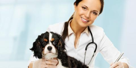 When & Why Do Pets Need Ultrasounds?, ,