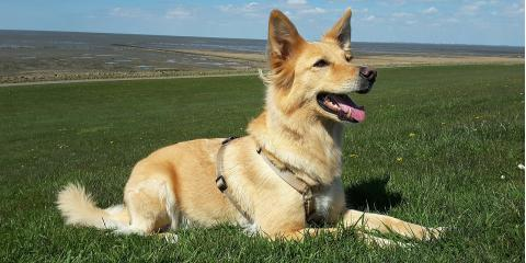 Why Dog Training Is So Important, ,