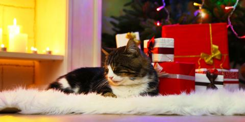 5 Hazards Pets May Face During the Holidays, ,