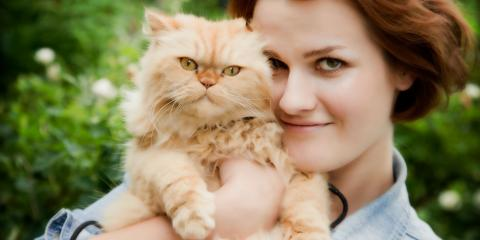 Your Cat's Health: 5 Warning Signs of Heat Stroke, ,