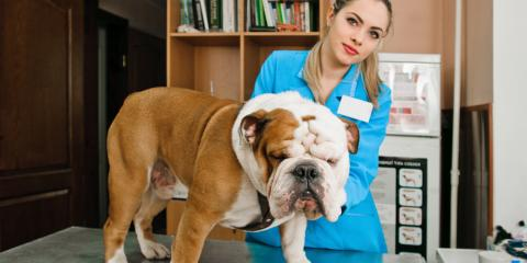 What Is the Importance of 6-Month Pet Care Exams?, ,