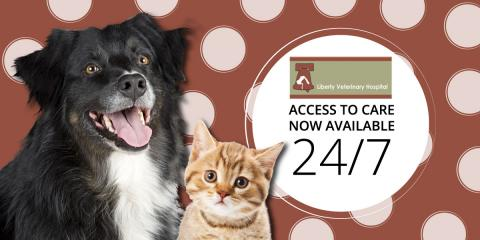 After Hours Veterinary Support Now Available 24/7!, ,