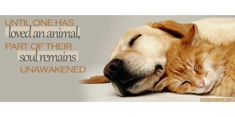 Canine Flu Bivalent Vaccine Requirement, ,