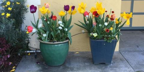 3 Maintenance Tips for Spring From the Licensed Home Repair Contractors at A-S Contracting, Greece, New York