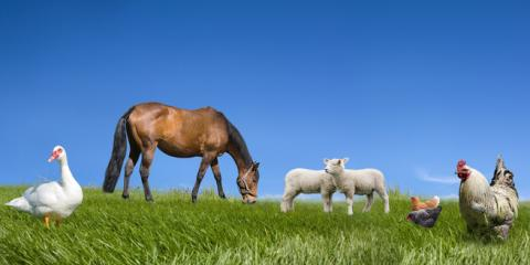Farm Insurance Experts Discuss 3 Wellness Tips for Your Farm Animals, Licking, Missouri