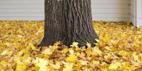 Why Fall Leaves Are a Fire Hazard, Licking, Missouri
