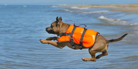 3 Reasons Your Dog Needs a Life Vest, Vermilion, Ohio