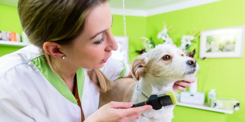 3 Benefits of Having a Grooming Schedule for Your Dog, Lillian, Alabama