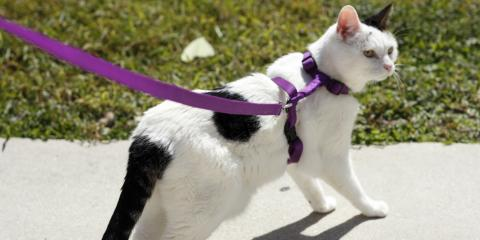 The Veterinarian's Guide to Walking Your Cat, Lillian, Alabama