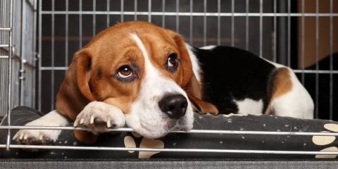 5 Pet Boarding Tips for Dogs With Separation Anxiety, Lillian, Alabama