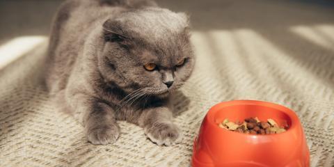 4 Reasons Cats Refuse Food, Lillian, Alabama