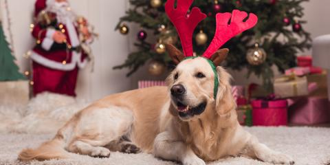 3 Holiday Safety Tips for Dog Owners, Lillian, Alabama