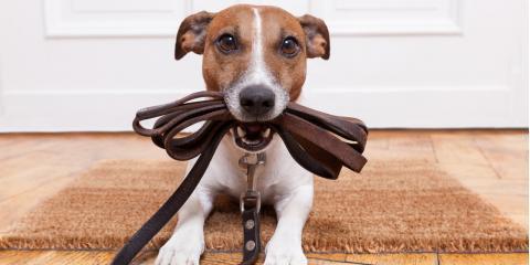 How Often Do Dogs Need to Be Walked?, Lincoln, Nebraska