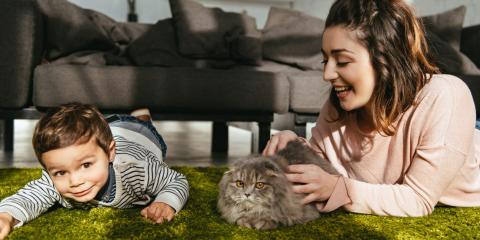How to Care for Your Senior Cat, Lincoln, Nebraska