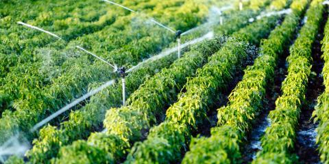 The Top 3 Benefits of a Custom Sprinkler System, Lincoln, Nebraska