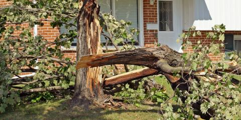 How to Deal With a Storm-Damaged Tree, Lincoln, Nebraska