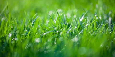 3 Types of Grass Suited to Nebraska Lawns, Lincoln, Nebraska