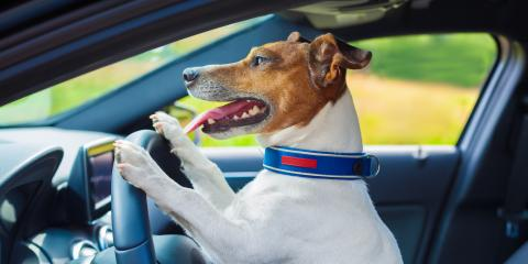 How to Handle Accidentally Locking Your Dog in the Car, Lincoln, Nebraska