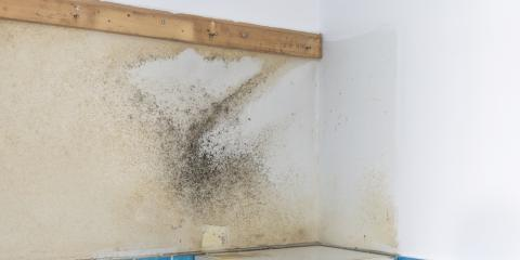5 Steps to Proper Mold Cleanup , Omaha, Nebraska