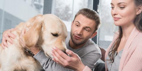 5 Veterinarian Tips to Ease Your Dog's Separation Anxiety, Lincoln, Nebraska