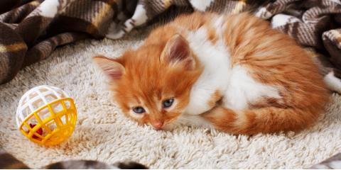 3 Signs Your Cat Is Sick, Lincoln, Nebraska