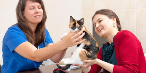 4 Questions to Ask Your Veterinarian About Heartworm, Lincoln, Nebraska