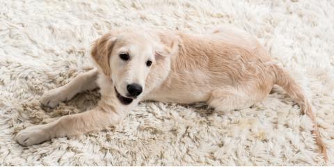 Lincoln Carpet Cleaning Professionals Explain How to Handle Pet Accidents, Stevens Creek, Nebraska