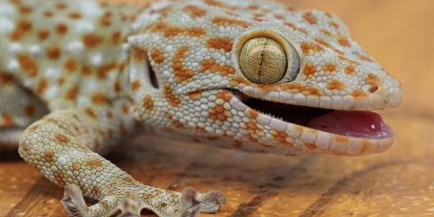 3 Reptiles That Make Good Pets, Lincoln, Nebraska