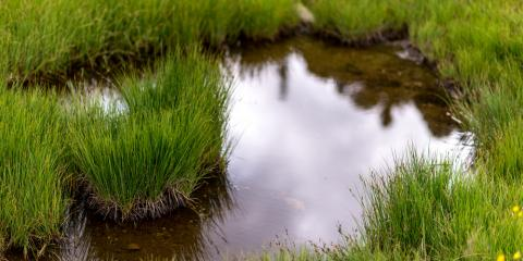 Too Much Water on Your Property? Use These 3 Landscape Design Tips, Stevens Creek, Nebraska