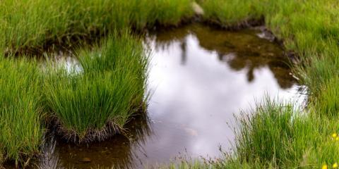 Use These 3 Landscape Design Tips, Stevens Creek