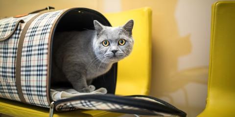 3 Tips for Preparing Pets for Moving Day, Lincoln, Nebraska
