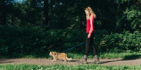 Should Pet Owners Take Their Cats on Walks?, Lincoln, Nebraska