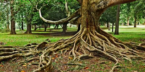 What to Know About Tree Roots & Your Septic Lines, Lincoln, Nebraska