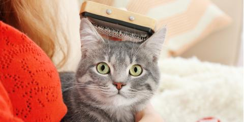 5 Common Pet Grooming Mistakes You Might Be Making, Lincoln, Nebraska