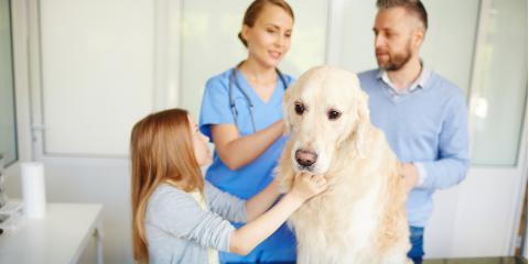 Do's & Don'ts for Relieving Your Dog's Fear of the Vet, Lincoln, Nebraska