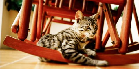 How to Choose Wood for a Rocking Chair, Lincoln, Nebraska