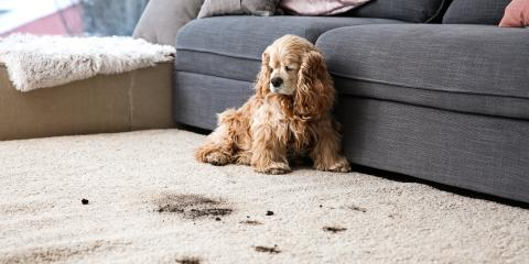 How to Pre-Treat Stubborn Carpet Stains, Lincoln, Nebraska
