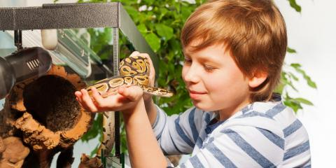 Getting a Pet Snake? How to Prepare, Lincoln, Nebraska