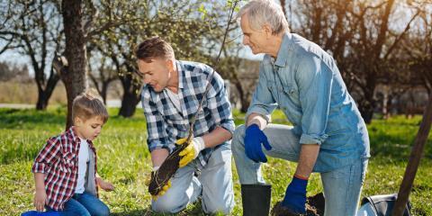 How To Take Care of Fruit Trees, Lincoln, Nebraska